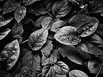 4k-wallpaper-close-up-dew-807598_editado