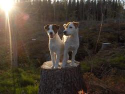 Xhiri och Buster