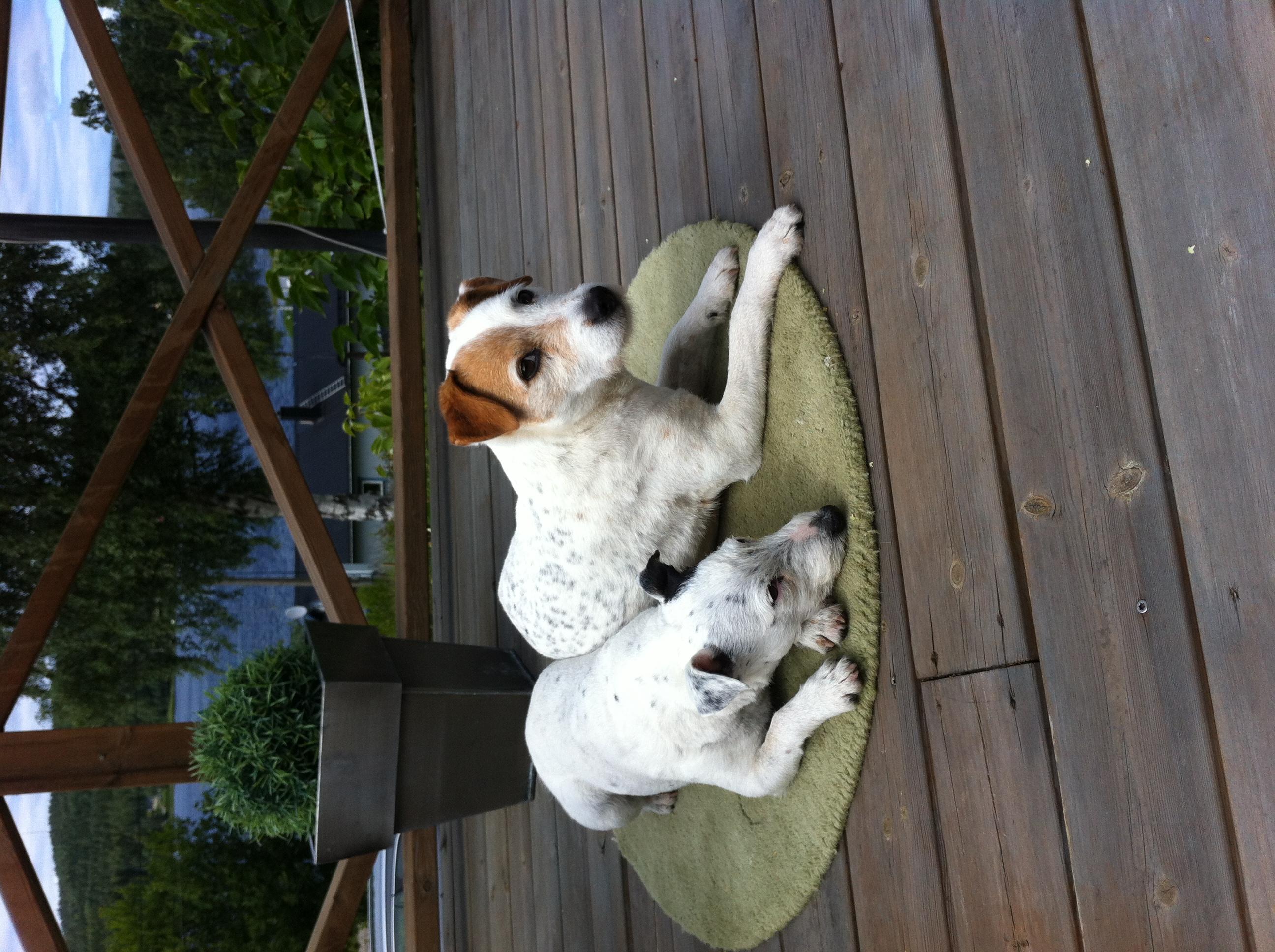 Buster och Emma