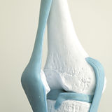 Human knee joint meniscus medical teachi