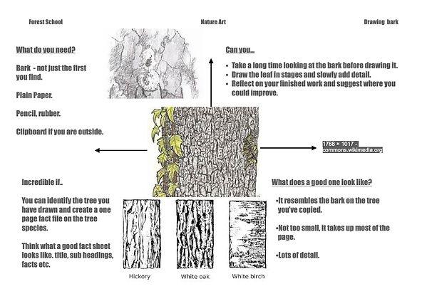 Drawing bark.jpg