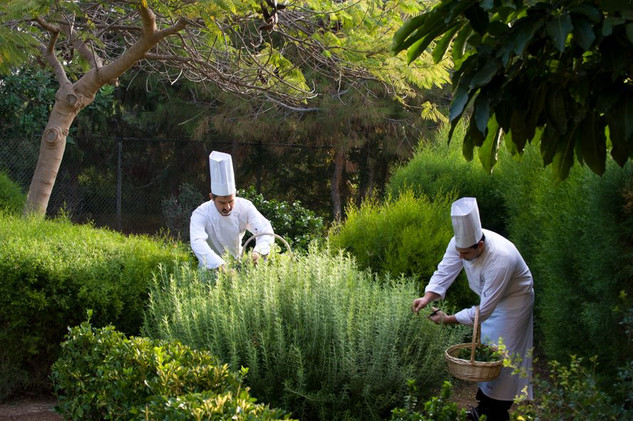 Elysium Organic Gardens