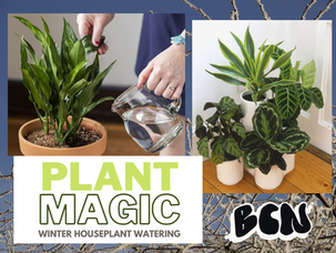 Plant Magic: Water you doing wrong? Winter houseplant watering for worried plant parents