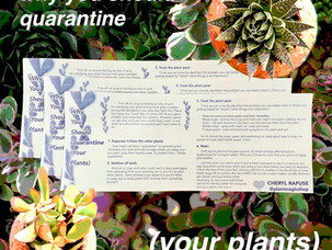Why you should quarantine (your plants)