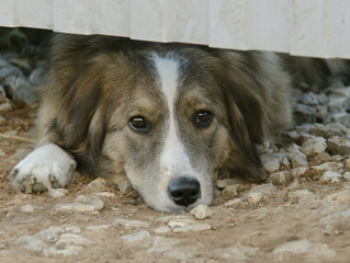 La Responsabilidad de una Mascota, di No al Maltrato Animal
