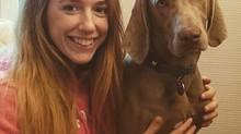 La relation homme-animal : étude de la communication vocale adressée au chien (Canis familiaris)