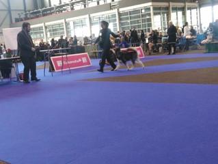 Exposition Canine Internationale de Genève