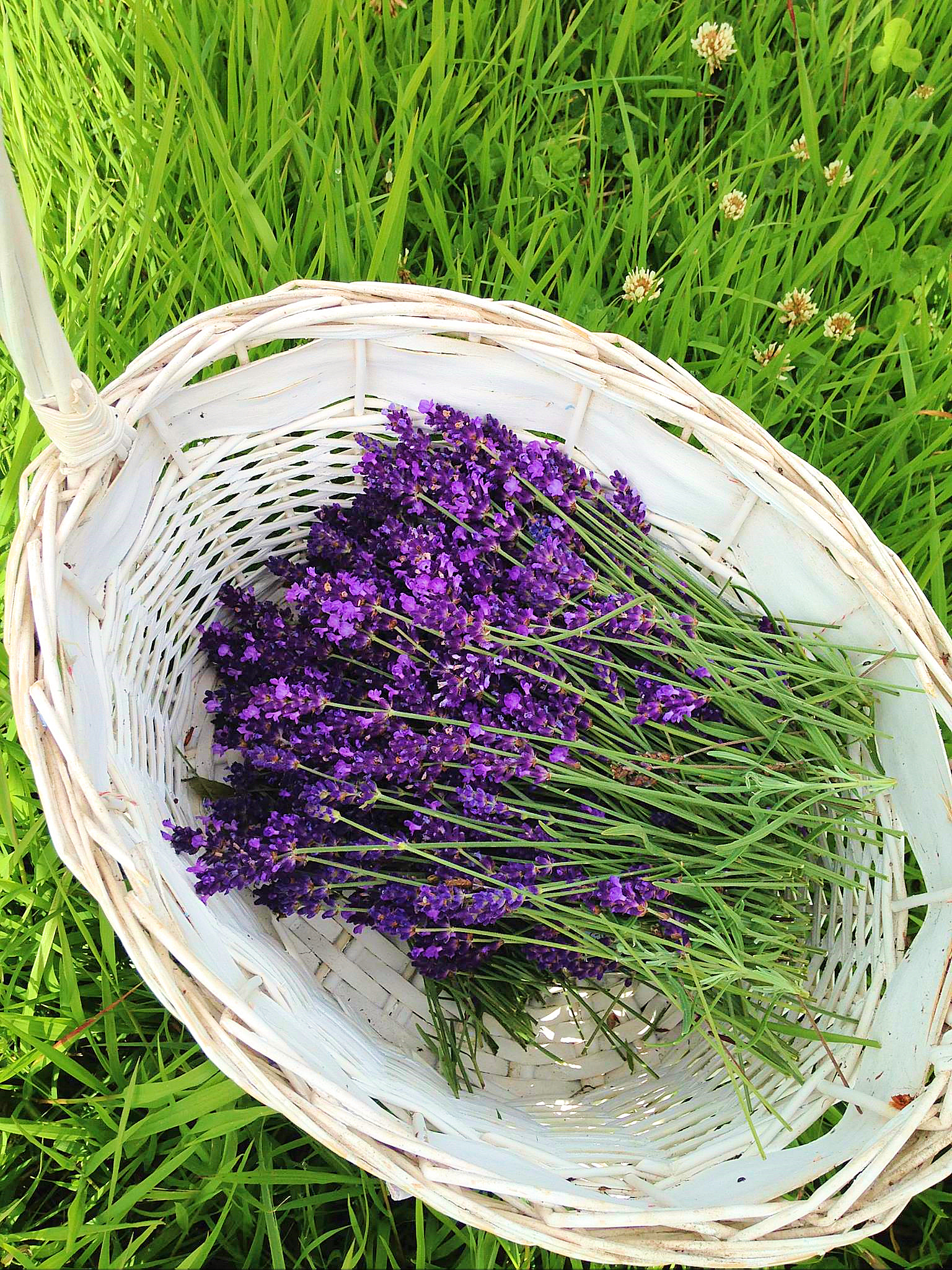 basketlavender