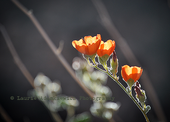 vegas_flowers©