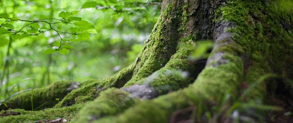 Treesnottees.PNG