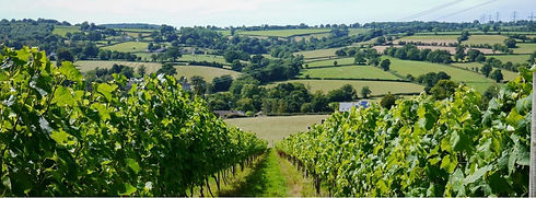 Dalwood Vineyard.JPG