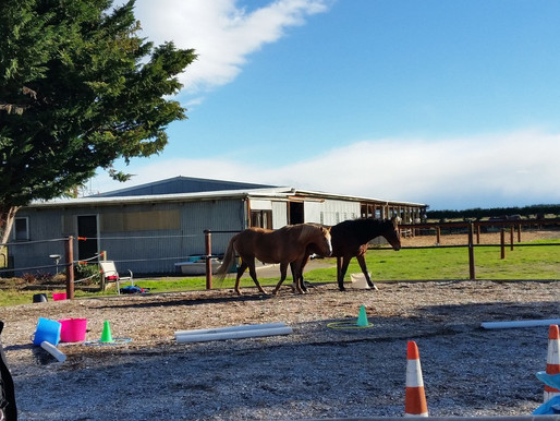 How Horses Create Conditions for Successful Organisational Change