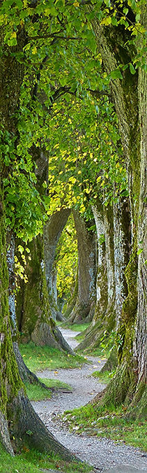 trees-sidebar-picture.jpg