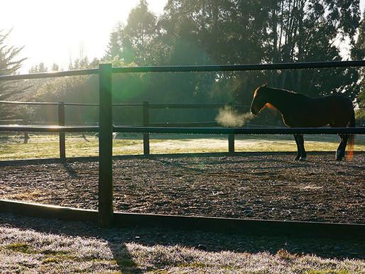 How Horses Create High Functioning Teams