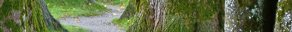 trees-banner.jpg