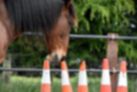 horse-working-with-cones-in-a-therapy-se