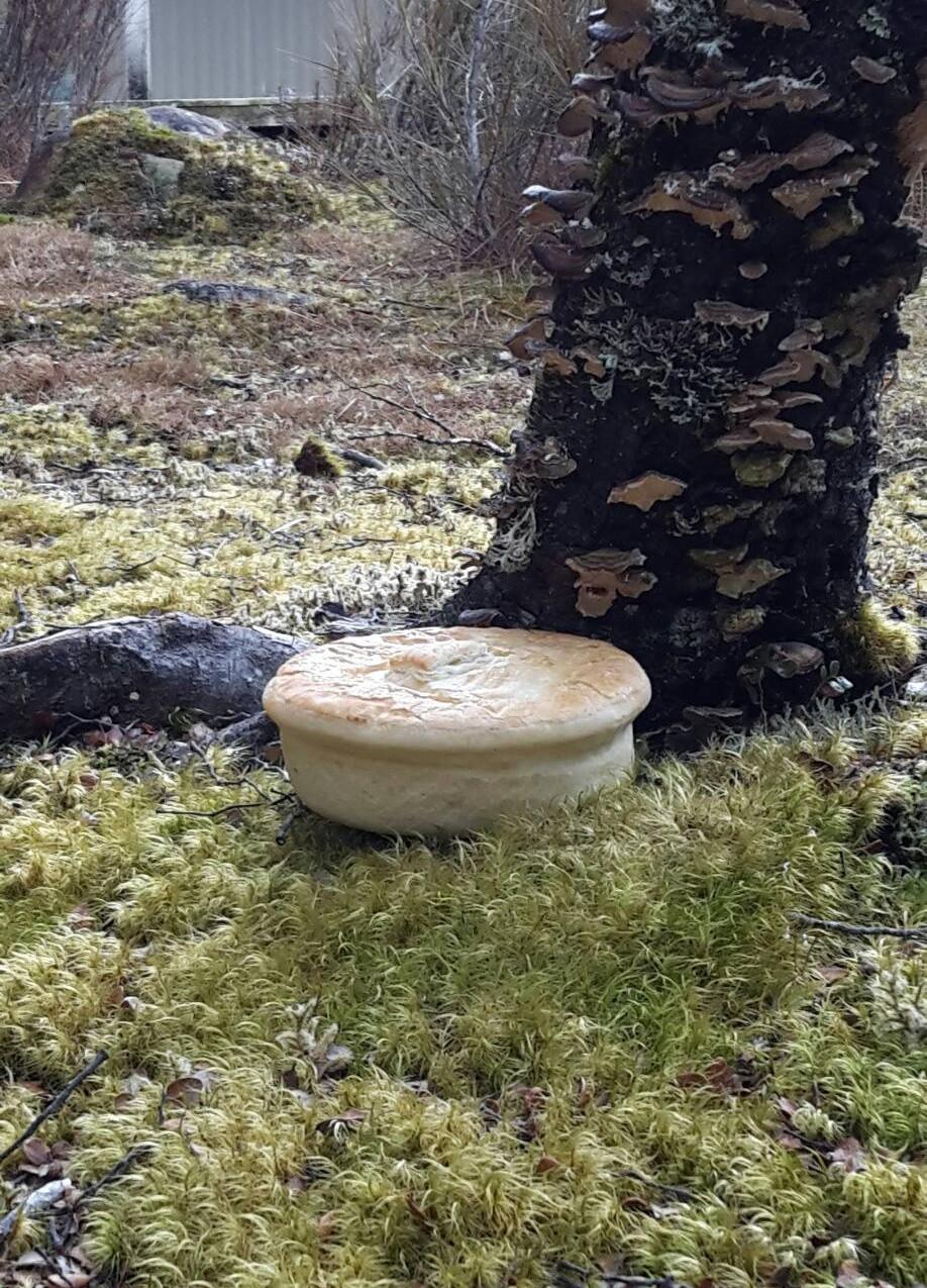pie-by-tree