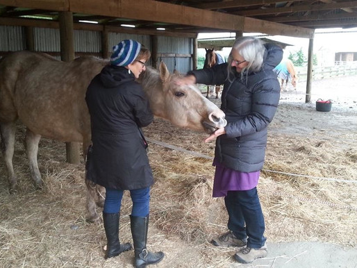 Mental Health, Horses & Letting Nature in.
