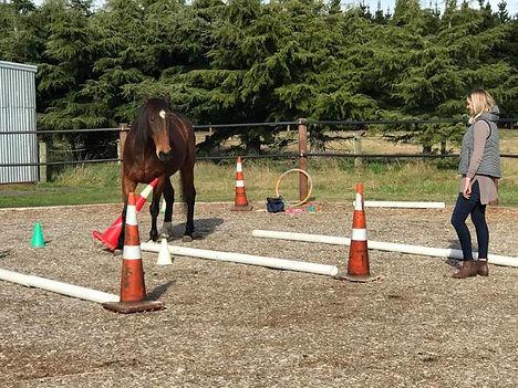 horse-team-building-cone-exercise.jpg
