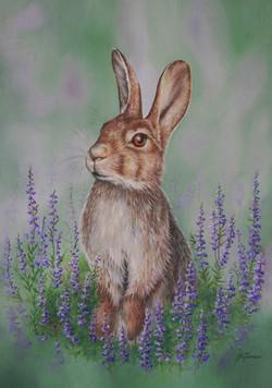 SALE Rabbit among Heather
