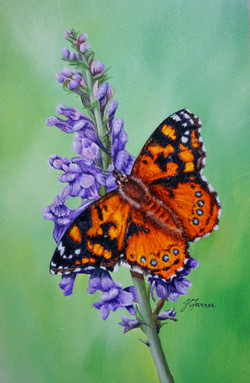 Painted_Lady_on_PurpleToadflax_5x7.5inch_£90