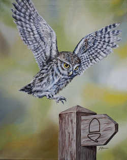 Cleveland Owl 16x20 oil on canvas