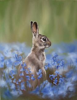 Rabbit among bluebells