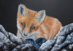 Fox Cub on Rocks