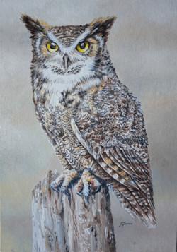Horned owl #2 8x12 A4