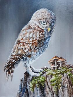 Little Owl and Mushroom 11.75x15.75