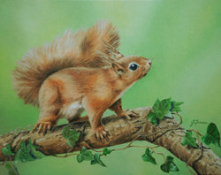 Red Squirrel with Ivy 9.5x7.5inch 24.5x19cm