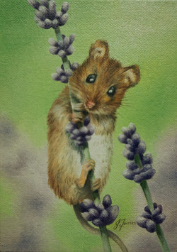 Field Mouse on lavender 5x7