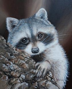 Raccoon_#2_8x10_inch_£160