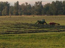 Hay fields surrounding RiverQuest