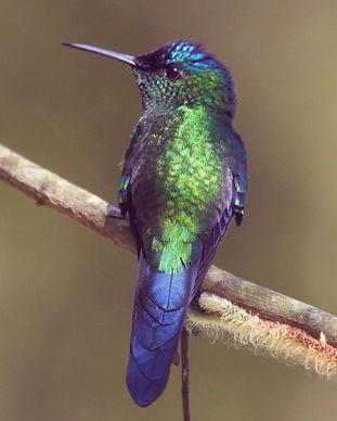 Hummingbird_edited_edited.jpg