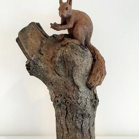Ecureuil à la noix