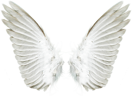 angel wimgs transparent background.png