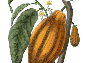 Here's what you need to know about ceremonial cacao...