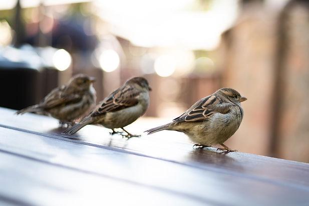 urban-sparrows-cafe-table-high-quality-photo.jpg