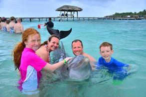 dolphin-encounter-at.jpg