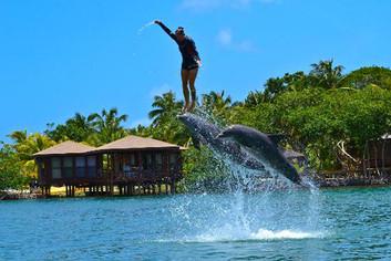 carousel-encuentro-con-delfines-3.jpg