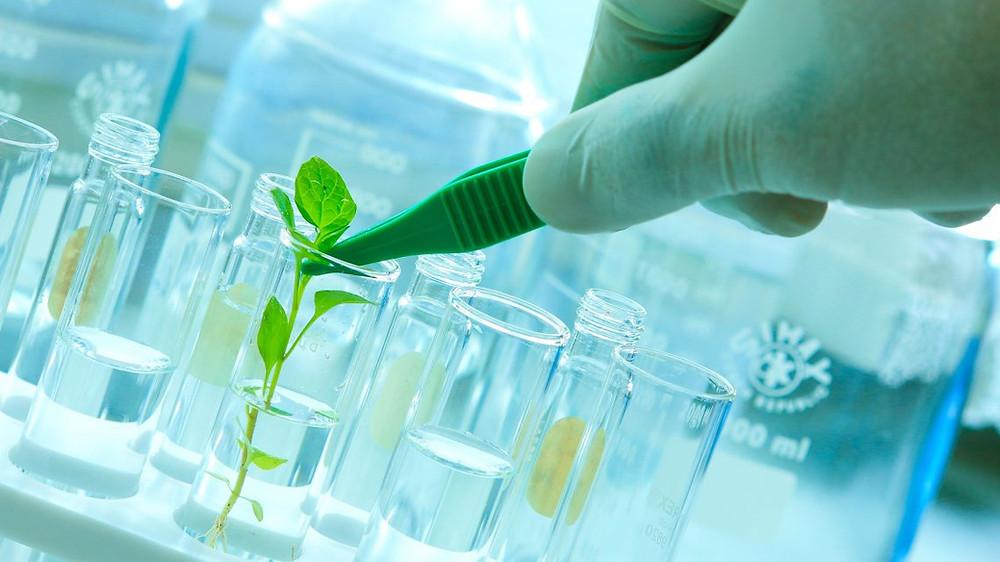 Desenvolvimento da Genética e da Biotecnologia, oferecendo novos recursos para a área médica e fortalecendo a indústria de medicamentos.