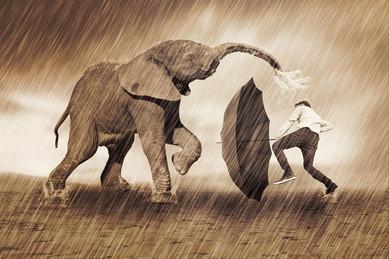 Een worsteling met mijn olifant