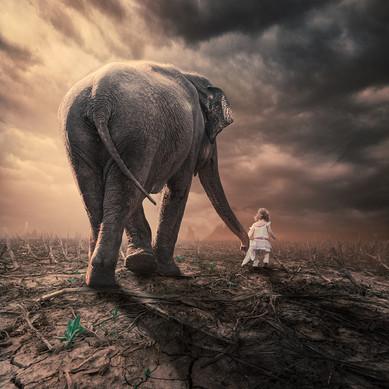 Hoe je een olifant kunt trainen