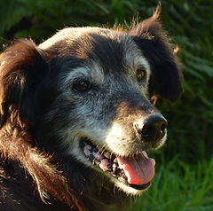 Hospice care for old dogs