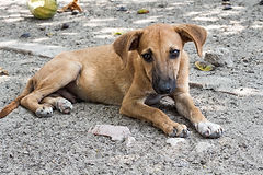 Rescue dog on native American reservation
