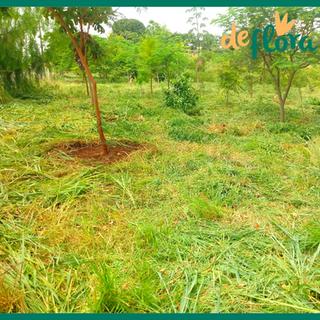 Deflora Reflorestamento (37).png