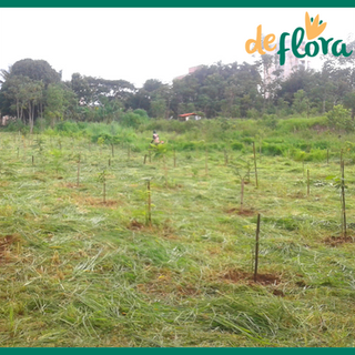 Deflora Reflorestamento (27).png