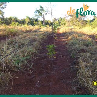 Deflora Reflorestamento (15).png