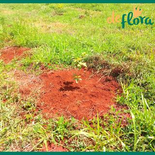 Deflora Reflorestamento (14).png